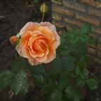 photo-51-6a43b383